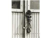 dry flowers on door by tibor honty