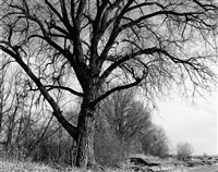 cottonwood, edge of development, longmont, colo by robert adams