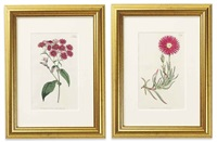 flowers (12 works) by william curtis