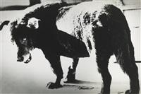 stray dog, misawa, aomori by daido moriyama