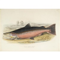 british salmonidae (bk w/12 works by w.h. lizars, folio) by william (sir) jardine (editor)