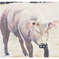 pink eared pig by billy sullivan