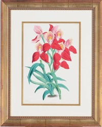orchids (6 works) by walter hood fitch