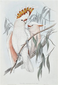 major mitchell's cockatoo (cacatua leadbeateri) by john gould