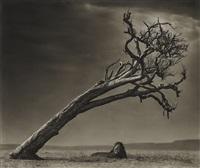 lion under leaning tree, masai mara by nick brandt