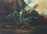 a forest floor still life with thistles and an adder by niccolino van houbraken