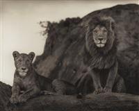 lion couple, serengeti by nick brandt