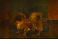 portrait of a pekingese in an interior by w.m. durrant