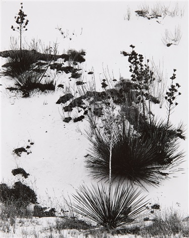 white sands new mexico by brett weston