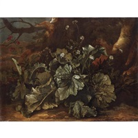 still life of plants on a forest floor by niccolino van houbraken
