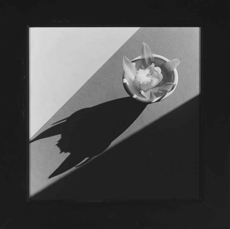 orchid with devil shadow by robert mapplethorpe