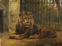 löwe im berliner zoo by paul friedrich meyerheim