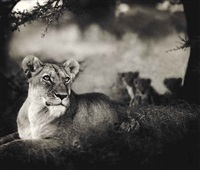 lioness with cubs under tree, serengeti by nick brandt