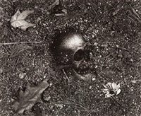 vanitas (from pictures of soil series) by vik muniz