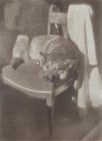 untitled (dog in sunlight on chair) by heinrich kühn