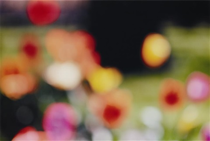 untitled flowers by piotr uklanski