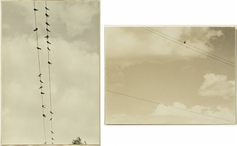 bird on wire birds on wire 2 works by alfred stieglitz