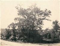 etude d'arbre, forêt de fontainebleau by eugène cuvelier