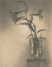 nature morte aux iris by adolph de meyer