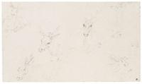 studies of deer by jan brueghel the younger
