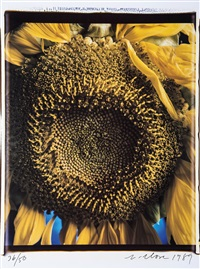 sunflower by chuck close