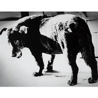 stray dog/misawa by daido moriyama