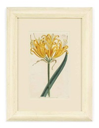 botanical (12 works) by william curtis