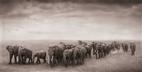 elephant journey to water, ambroseli by nick brandt