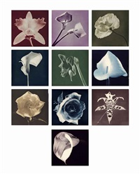 flowers by robert mapplethorpe