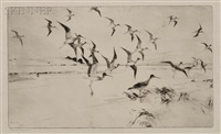 yellowlegs alighting by frank weston benson