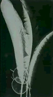 plume et feuilles by claude tolmer