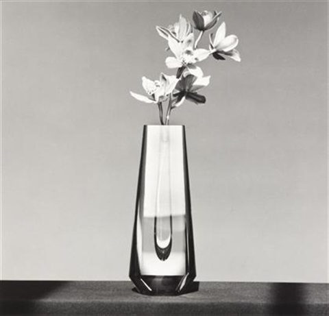 orchid by robert mapplethorpe