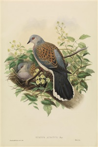 uccelli by john gould