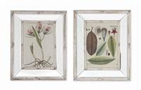 botanical studies (12 works) by nicolaus joseph von jacquin