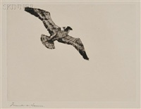 soaring fish hawk by frank weston benson