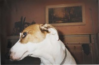untitled - family dog by richard billingham