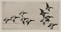 canvasbacks by frank weston benson