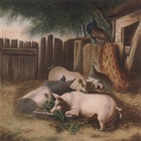 pigs and a peacock in a sty by w.d. maw