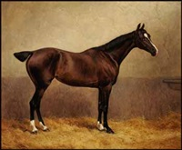 portrait of a racing horse in a stable by frank paton