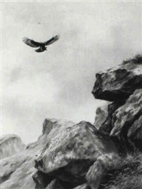golden eagle about to alight by david morrison reid henry
