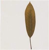 magnolia americana by joseph beuys