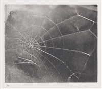 spiderweb by vija celmins