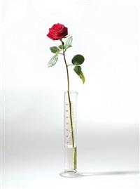 rose für direkte demokratie by joseph beuys