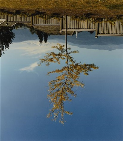 tree on the former site of camera obscura by rodney graham