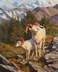 dall sheep low on the mountain by chad poppleton