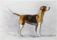 hound by desmond snee