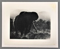 photo of elephant silhouette by peter beard