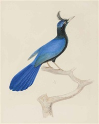 a blue bird of paradise by jean gabriel prêtre
