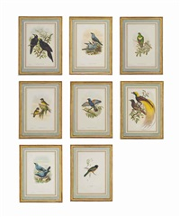 eight handcoloured lithographs (from birds of new guinea and the adjacent papua islands, published by j. gould, london) by john gould