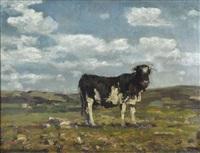 mucca al pascolo by beppe ciardi